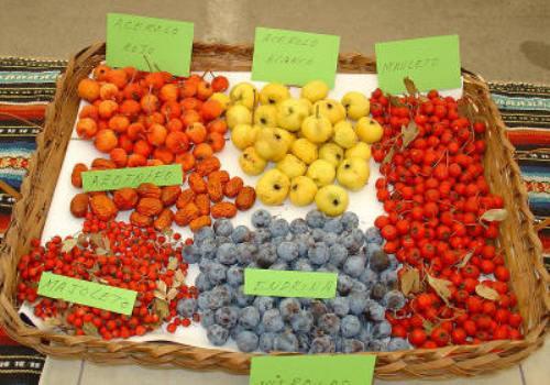 Las frutas de otoño, en todo su esplendor (II)