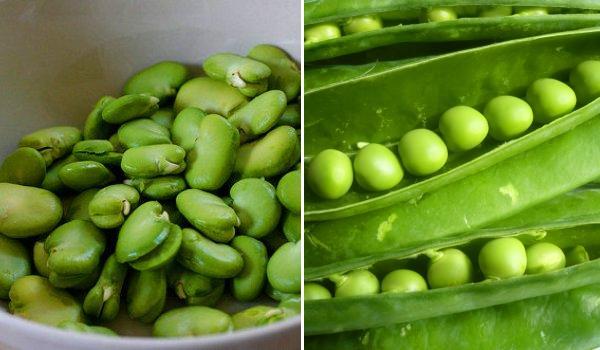 Guisantes y habas, verduras de primavera