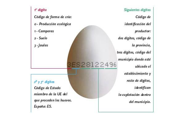 Calidad de los huevos, ¿cómo elegir la mejor?